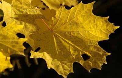 aromaterapia-outono-cuidados-pele